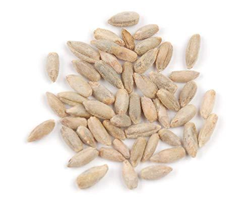 Winter Rye Seeds - Non-GMO Rye Grass Seed (10 Pound Bag)