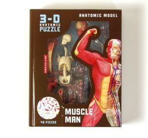Human Muscle and Skeleton Model