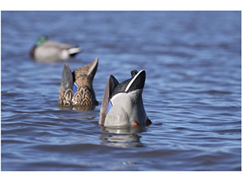 (GHG Pro-Grade Weighted Keel Mallard Duck Decoys Butt-Up Feeder Pack of 2)
