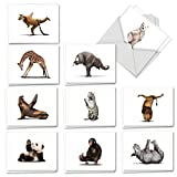 Zoo Yoga - 20 All Occasion Note Cards with Envelope (4 x 5.12 Inch) - Assorted Animals, Boxed Greeting Notecard Set - Wildlife Stationery Card Gifts (2 Each, 10 Designs) AM6547OCB-B2x10