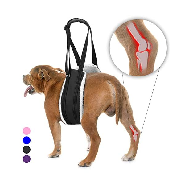Bolux Portable Dog Sling Rear Legs – Dog Lift Harness for Back Legs, Adjustable Hip Support Harness for Canine Aid… Click on image for further info.