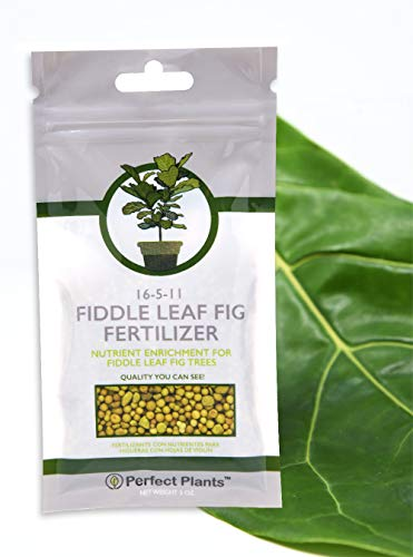 Fiddle Leaf Fig Slow-Release Fertilizer by Perfect Plants - Apply Every 6 Months for Nutrient Enrichment - 5 Oz. Bag for Indoor and Outdoor Use on All Fig Tree Sizes (Best Soil For Fiddle Leaf Fig)