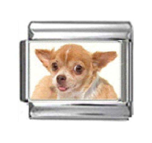 Stylysh Charms Chihuahua Dog Photo Italian 9mm Link DG144 ()