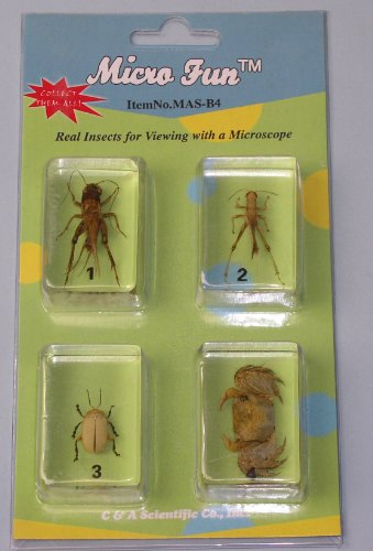 Bug Specimens (Cricket, Locust, Yellow Leaf Beetle, Crab)