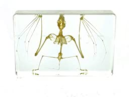 Real Bat Skeleton in Acrylic Block