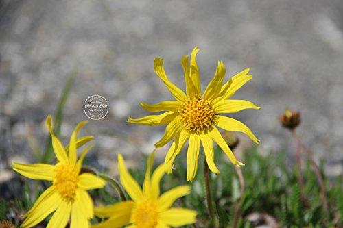 #45 Sun Dial Flower Signed Photo Print