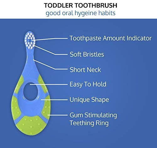 41bFyaR 11L - Baby/Toddler Small Teether Toothbrushes 4-Pack, Oral Hygiene, Blue And Green