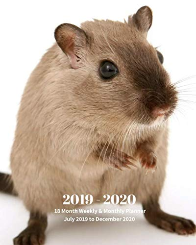 2019 - 2020 | 18 Month Weekly & Monthly Planner July 2019 to December 2020: Rat Rodent Vol 3 Monthly Calendar with U.S./UK/ ... Holidays- Calendar in Review/Notes 8 x 10 in. by Dazzle Book Press