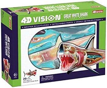 Puzzle Assembler des Jouets Split 20 Parties Fvdsghdf Mod/èle de Puzzle danatomie de Requin 4D