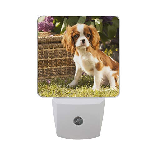 OuLian Night Light Cute Pet Cavalier King Charles Spaniel Led Light Lamp for Hallway, Kitchen, Bathroom, Bedroom, Stairs, DaylightWhite, Bedroom, Compact