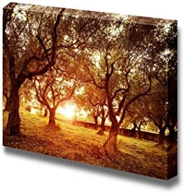 Beautiful Scenery Landscape Sunset in Olive Trees Garden Wall Decor