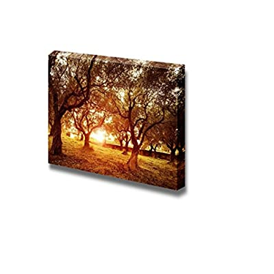 Canvas Prints Wall Art - Beautiful Scenery/Landscape Sunset in Olive Trees Garden | Modern Wall Decor/Home Decoration Stretched Gallery Canvas Wrap Giclee Print & Ready to Hang - 24