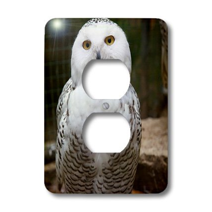 3dRose Lsp_79143_6 Pretty White Snowy Owl- Birds- Animals 2 Plug Outlet Cover