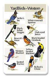 Birdsong Identiflyer Songcard - Yardbirds Western