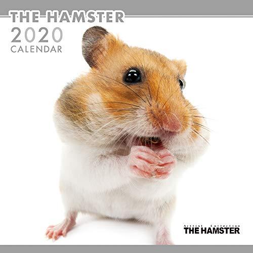 Guinea Pigs 2001 Calendar - The Hamster Wall Calendar 2020