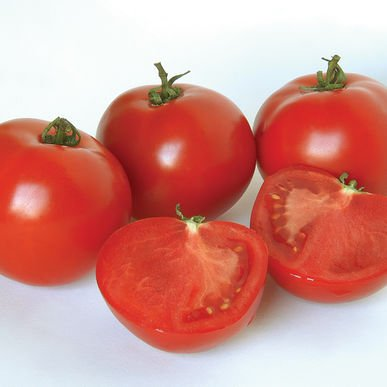 David's Garden Seeds Tomato Slicing Polbig DGS178H (Red) 25 Hybrid Seeds