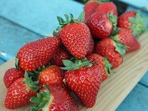 Erdbeeren 'Polka' ® - Fragaria 'Polka' ® - 12 Pflanzen im Topf
