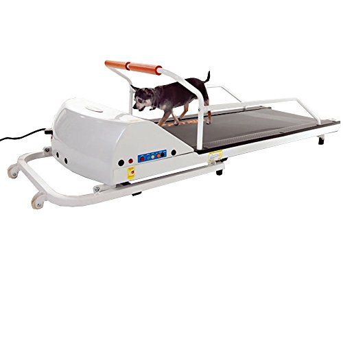 GoPet Petrun Pr710 Foldable Dog Treadmill Indoor Exercise / Fitness Kit - For Dogs Upto 44 Pounds by GoPet