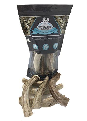 WhiteTail Naturals Premium Deer Antlers For Dogs ( 6 Pack- Medium 5 -7 Inches ) Antler Chews | USA Natural Dog Chew | Perfect For Medium Breeds