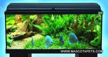 Acuario Aquadream 100 de 100x30x40 con luz y filtro: Amazon.es: Productos para mascotas