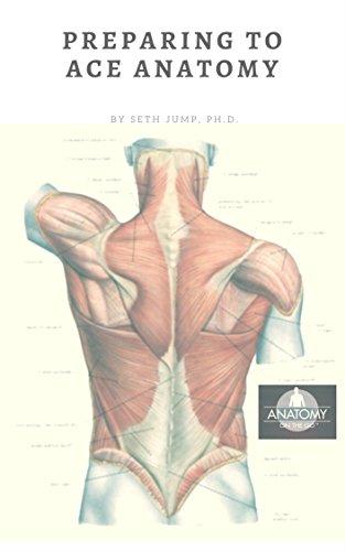 ace anatomy - 3