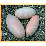 Bobby-Seeds Kürbissamen Pink Jumbo Banana Portion