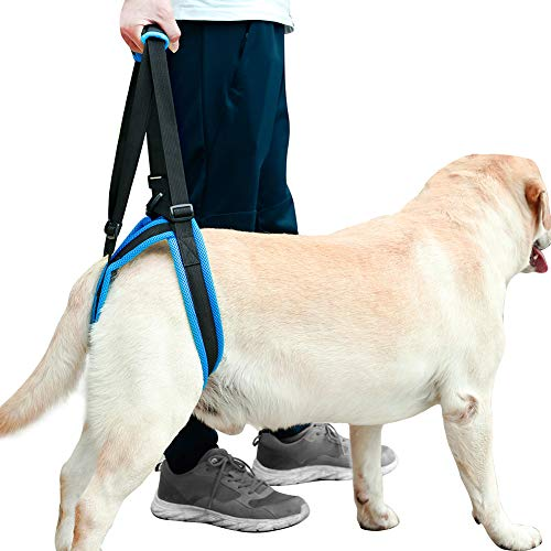ROZKITCH Pet Dog Support Harness Rear Lifting Harness Veterinarian Approved for Old K9 Helps with Poor Stability, Joint Injuries Elderly and Arthritis ACL Rehabilitation Rehab (L)