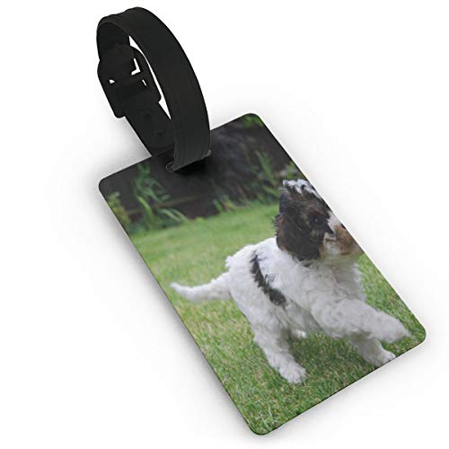 Personalized Luggage Tag Cute Stunning Cavachon Puppies for sale  Delivered anywhere in Canada