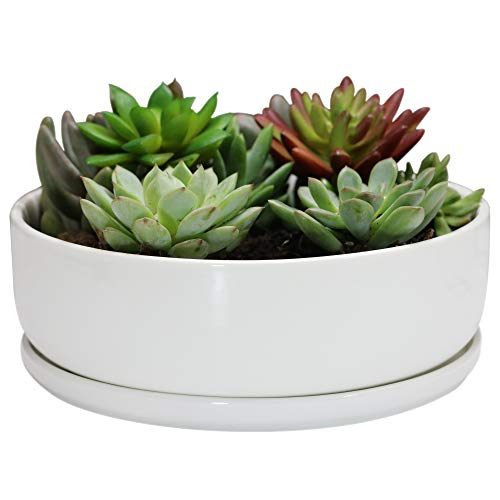 - Sqowl 8 inch White Round Ceramic Succulent Planter Pot Modern Flower Cactus herb Big Planter with Removable Saucer Indoor or Outdoor
