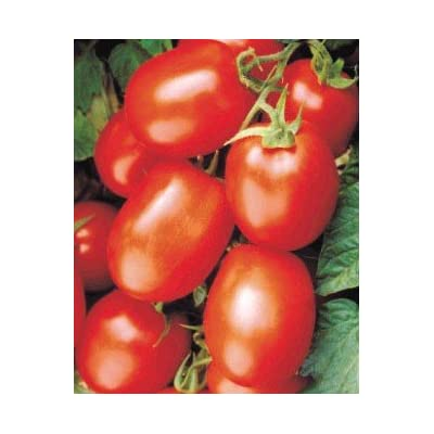 Health Kick Tomato-20 Seeds-Concentration of lycopene : Vegetable Plants : Garden & Outdoor