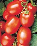 Health Kick Tomato-20 Seeds-Concentration of Lycopene