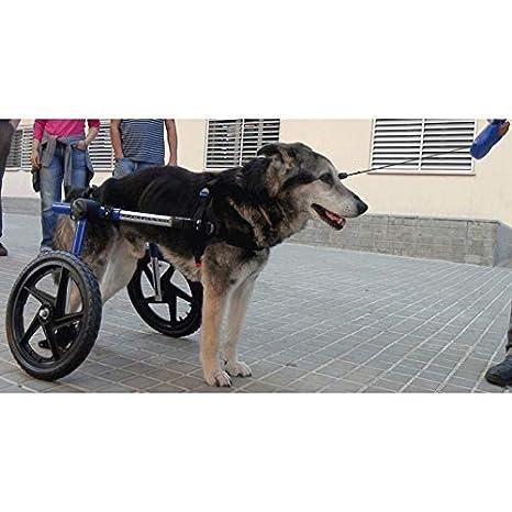 Ortocanis Silla de Ruedas para Perros de más de 11kg: Amazon.es ...