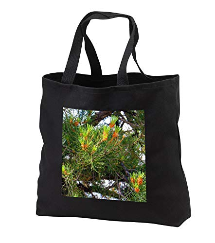 Jos Fauxtographee- Budding Pine - Pine Cones just budding out on a pine tree on green - Tote Bags - Black Tote Bag JUMBO 20w x 15h x 5d (tb_291355_3)