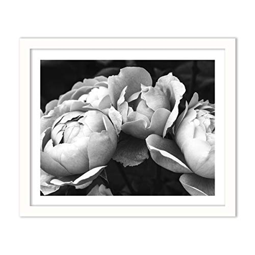 Humble Chic Framed Wall Decor - Fine Art Picture Poster Prints in White Frame for Home Decorations Living Dining Room Bedroom Kitchen Bathroom Office - Black & White Peonies BW, 16x20 Horizontal