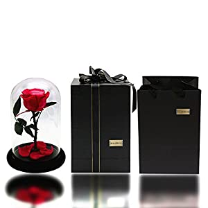 Julymoda Rose Flower Festive Preserved Forever Rose Immortal Fresh Rose Glass Cover Unique Gifts 3