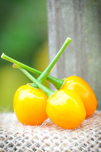 Aji Charapita Charapa Wild Peruvian Heirloom Pepper Premium Seed Packet (Peruvian Sweet Pepper Seeds)