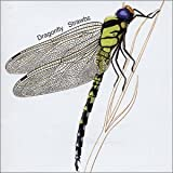 Dragonfly by Strawbs (2001-08-02)