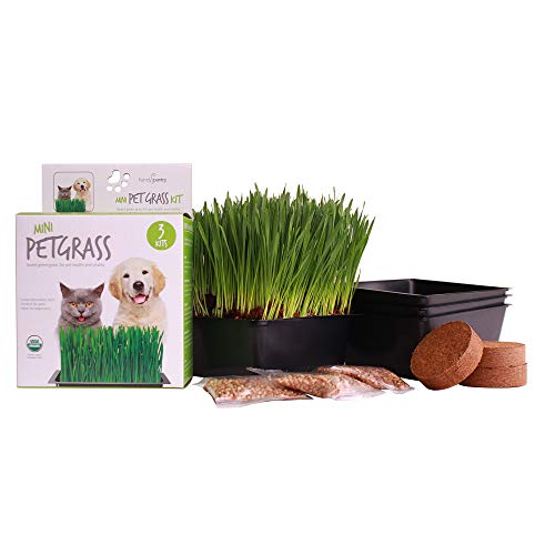 Handy Pantry Organic Cat Grass Kit | Includes Everything You Need: 3 Trays, 3 Soil Pucks, and 3 Packs Non GMO Wheatgrass Seed | A Healthy Treat For Cats, Dogs, Rabbits, and More (Best Greens To Eat)