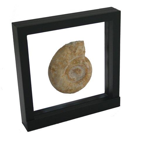 SAFE 3D Floating Frame for Seashells - 7