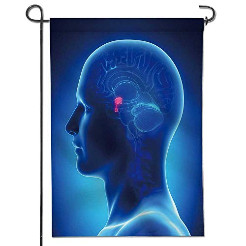 (Celebrate Patriotic Garden Flag Brain Anatomy pituitary Gland Cross Section Decorative Double Sided Flag for Anniversary Decor14 x 21