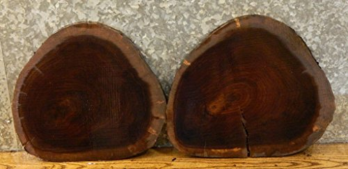 2- Very Rustic Live Edge Round Cut Black Walnut Taxidermy Base Slabs T: 15/16'', D: 15 3/4'' - 12591,12607