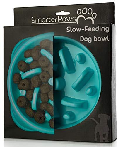 Slow eating dog bowl