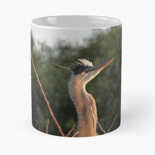 Birds Herons Great Blue Juvenile - Best Gift Ceramic Coffee Mugs 11 Oz