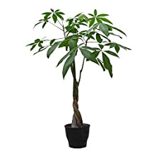 5Pcs/pack Braid Pachira Big Money Tree Seeds Bonsai Tree Seeds Indoor Ornamental Plants Home Garden Decoration Miniascape Seeds