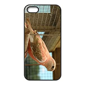 The Parrot Hight Quality Plastic Case for Iphone 5s