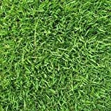 The Dirty Gardener Zenith Zoysia Grass Seed - 5 Pounds