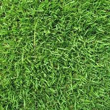 The Dirty Gardener Zenith Zoysia Grass Seed - 5 Pounds by The Dirty Gardener (Image #5)