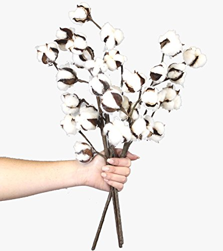 "[New] Cotton Stems - 3 Stems/Pack - 10 Cotton Buds/Stem - 20"" Tall - Farmhouse Style Floral Display Filler - Rustic Wedding Centerpiece"