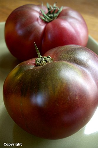 Purple Tomato (Cherokee Purple Heirloom Tomato Seeds- 75+ Seeds by Ohio Heirloom Seeds)
