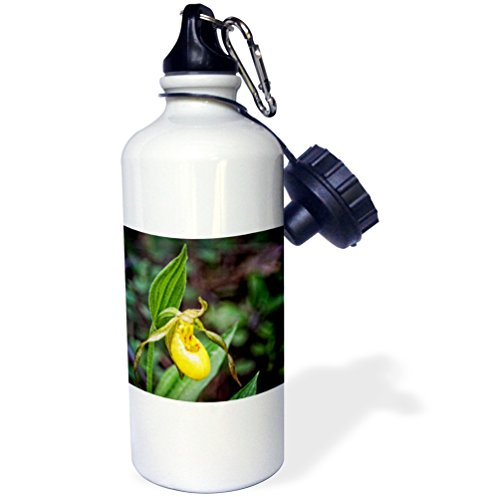 3dRose Boehm Photography Flower - Yellow Ladys Slipper Flower - 21 oz Sports Water Bottle (wb_245579_1)